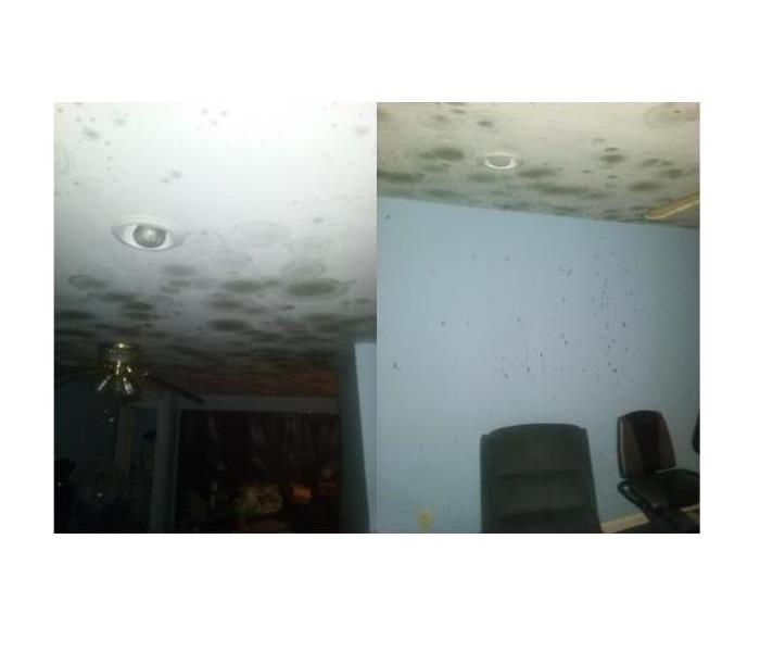 Living Room Mold